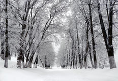 Winter park, scenery Royalty Free Stock Photos