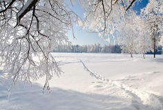 Winter park in snow Royalty Free Stock Image