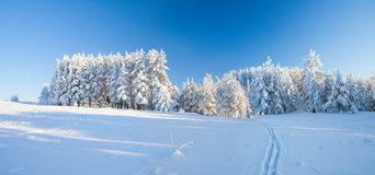 Winter park in snow Stock Image