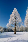 Winter park in snow. With blue sky and white trees Royalty Free Stock Photo