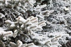 Winter park in snow Stock Image
