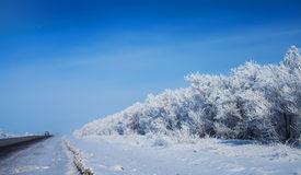Winter park in snow. beautiful winter landscape with road and sn Royalty Free Stock Photos