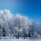 Winter park in snow. beautiful winter landscape with road and sn Royalty Free Stock Images