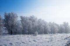 Winter park in snow. beautiful winter landscape with road and sn Stock Image