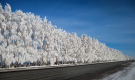 Winter park in snow. beautiful winter landscape with road and sn Stock Photo