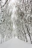 Winter Park Royalty Free Stock Photo
