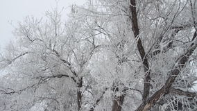 Winter park with snow covered trees stock footage
