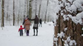 Winter park with snow covered trees, a family with children walking in the park. stock footage