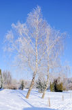 Winter park in snow. Winter. Snow-covered trees in forest royalty free stock photography