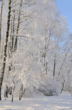 Winter park in snow. Winter. Snow-covered trees in forest Royalty Free Stock Image