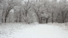 Winter park with snow covered trees stock video footage