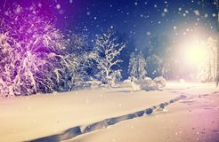 Winter park in snow. fantastic wintry landscape. frosty evening in city park. Snow covered trees glowing in light lantern. instagram filter. retro vintage Royalty Free Stock Image