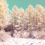 Winter park in snow Royalty Free Stock Photos