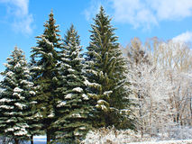Winter park in snow. Royalty Free Stock Images