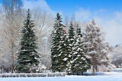 Winter park in snow. Stock Photos