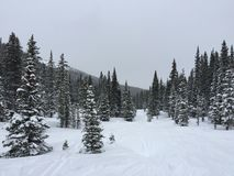 Ski Tracks in Mountain Snow. An overcast day at Winter Park, Colorado, with snow and pine trees Stock Photo
