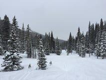 Ski Tracks in Snow Stock Photo