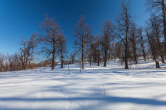 The winter park with snow Royalty Free Stock Photo