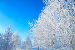 Winter park in snow. Snowy beautiful wite winter stock image