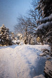 Winter park snow on trees Christmas trees bushes snow-covered road. Overlooks the sun through branches can see the blue sky Royalty Free Stock Images