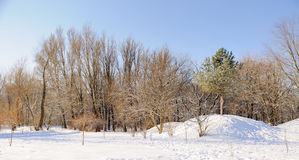 Winter park in snow. Trees in park covered with snow royalty free stock image