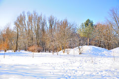 Winter park in snow. Trees in park covered with snow Stock Photography