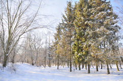 Winter park in snow. Trees in park covered with snow royalty free stock images