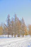 Winter park in snow. Trees in park covered with snow royalty free stock photography