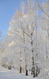 Winter park in snow. Trees in park covered with snow stock image