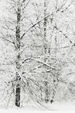 Winter park in snow Stock Photos