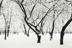 Winter park in the snow. Royalty Free Stock Photos