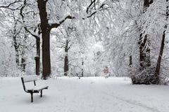 Winter park after snowfall Stock Photos
