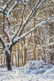 Winter park after a snowfall. On a sunny day royalty free stock photography