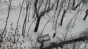 Winter in the park. Snowing. Winter Park, view from above. Snowing. Along the path there is a woman in a fur coat.Graphically black and white picture stock video
