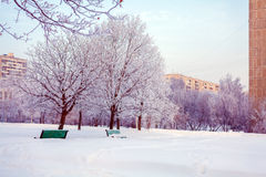 Winter Park with Snowy Benches Stock Photo