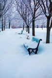 Winter Park with Snowy Benches Royalty Free Stock Photography