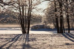 Winter park in sunny day Royalty Free Stock Photo
