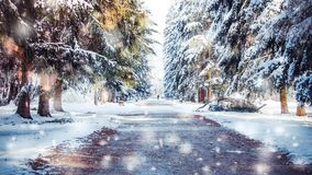Winter park on a sunny day. Trees, road covered with snow on cold day. Flakes of snow winter close up in nature. New Year Christmas. Cinemagraph seamless loop stock video