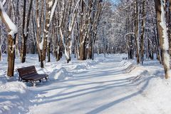 Winter park in sunny day. Winter park road. With bench Royalty Free Stock Photography