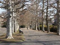 Winter park in Tokyo, Japan Stock Image