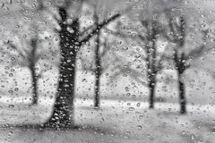 Winter park with tree silhouette through the raindrops in a snow Stock Image