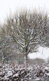 Winter park tree Royalty Free Stock Photos