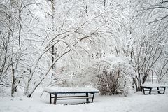 Winter park, trees and a bench covered with snow Stock Photo