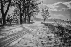 Winter in the park. Winter park trees cloud snow snowstorm Stock Images