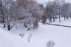 Winter in the park. Trees covered with snow. Circle all in white Royalty Free Stock Images