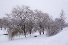 Winter in the park. Trees covered with snow. Circle all in white Stock Image