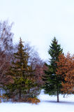 Winter park. Trees on the embankment covered with snow Royalty Free Stock Photos