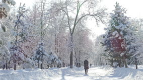 Winter Park Trees Snowfall People Sunlight 4K. Winter park on a sunny day with not recognizable people stock video footage