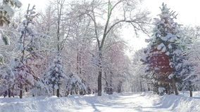 Winter Park Trees Snowfall Sunlight 4K. Winter park on a sunny day with sparkles after the snowfall stock video footage