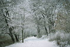 Winter park. Two man woman in the winter park Royalty Free Stock Photography